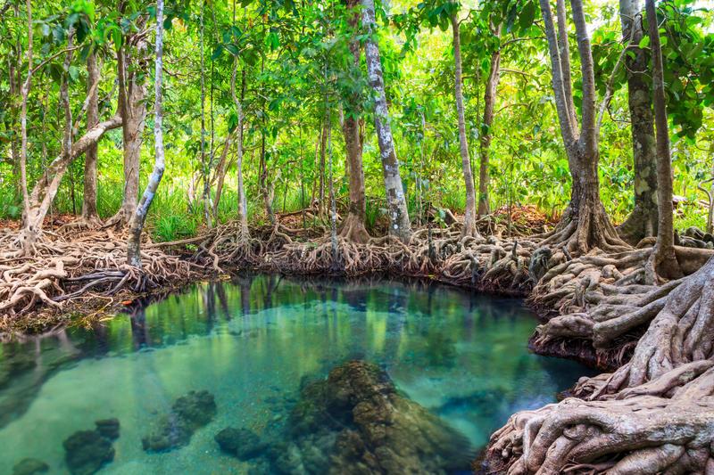 Articulación entre las asignaturas de Geografía y Sistemas ambientales y Sociedades
